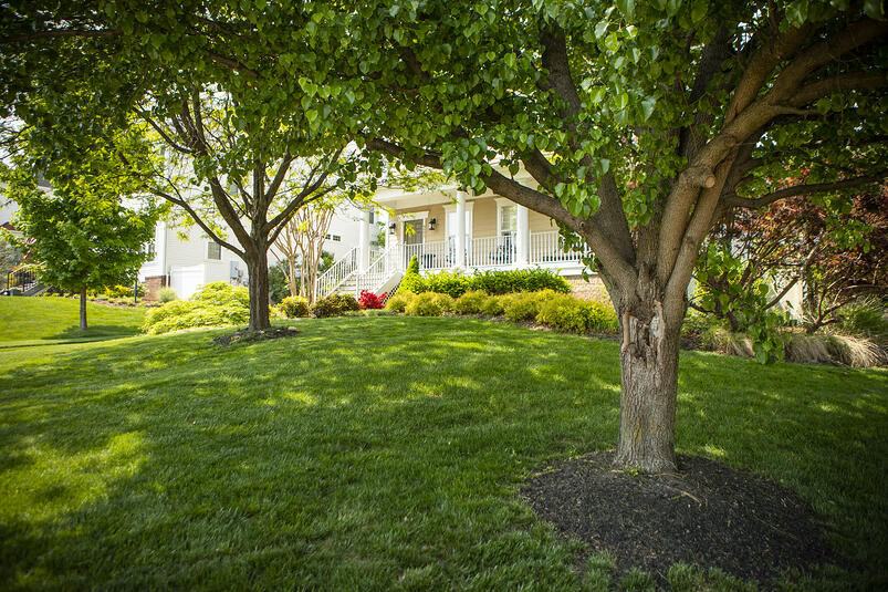 healthy lawn and plants in Alexandria, VA