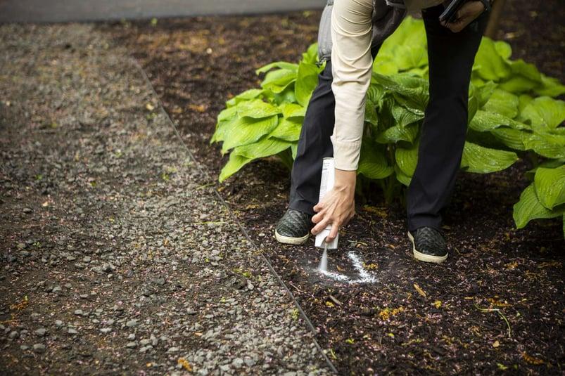 landscape redo transplanting plants