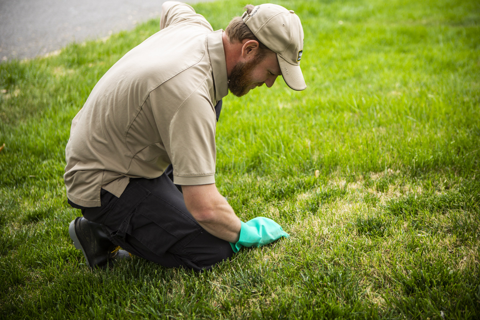 Lawn care professional inspecting lawn