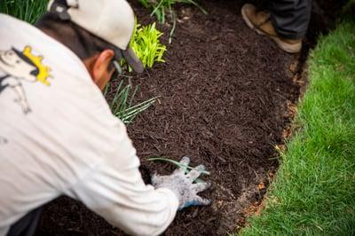Kingstowne Lawn & Landscape technician applying mulch in Alexandria, VA