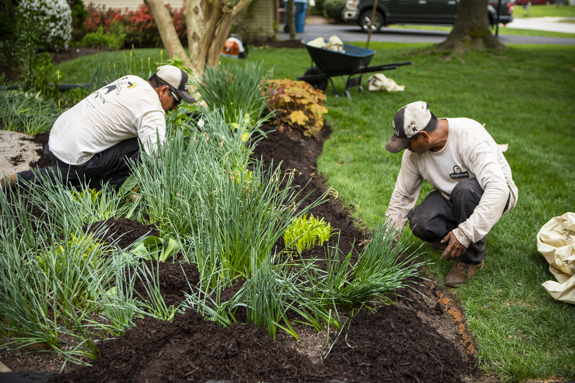 Kingstowne Lawn & Landscape maintenance technicians planting