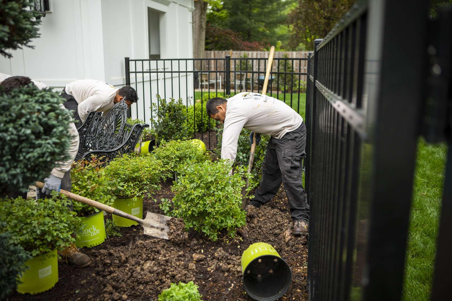 Landscape professionals installing new plants in summer months