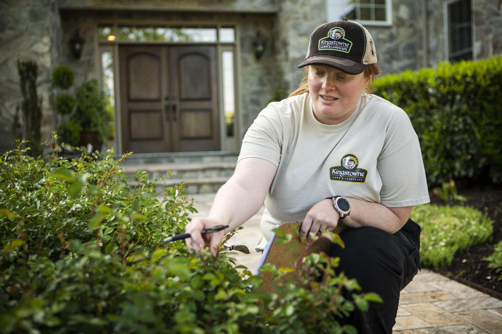 Kingstowne Lawn & Landscape technician inspecting shrubs