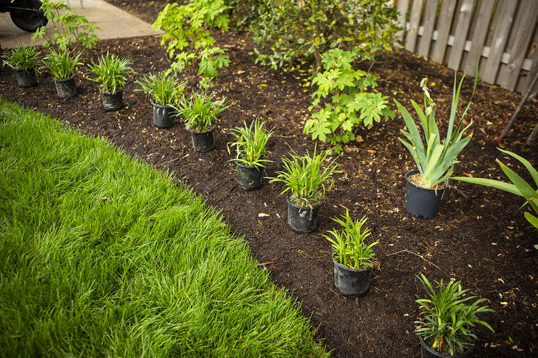plantings-containers-installation-shrubs-mulch