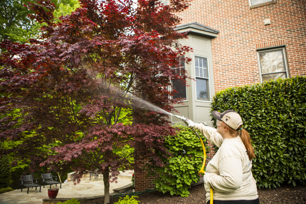 spraying-ornamental-tree-shrubs-plantings-2