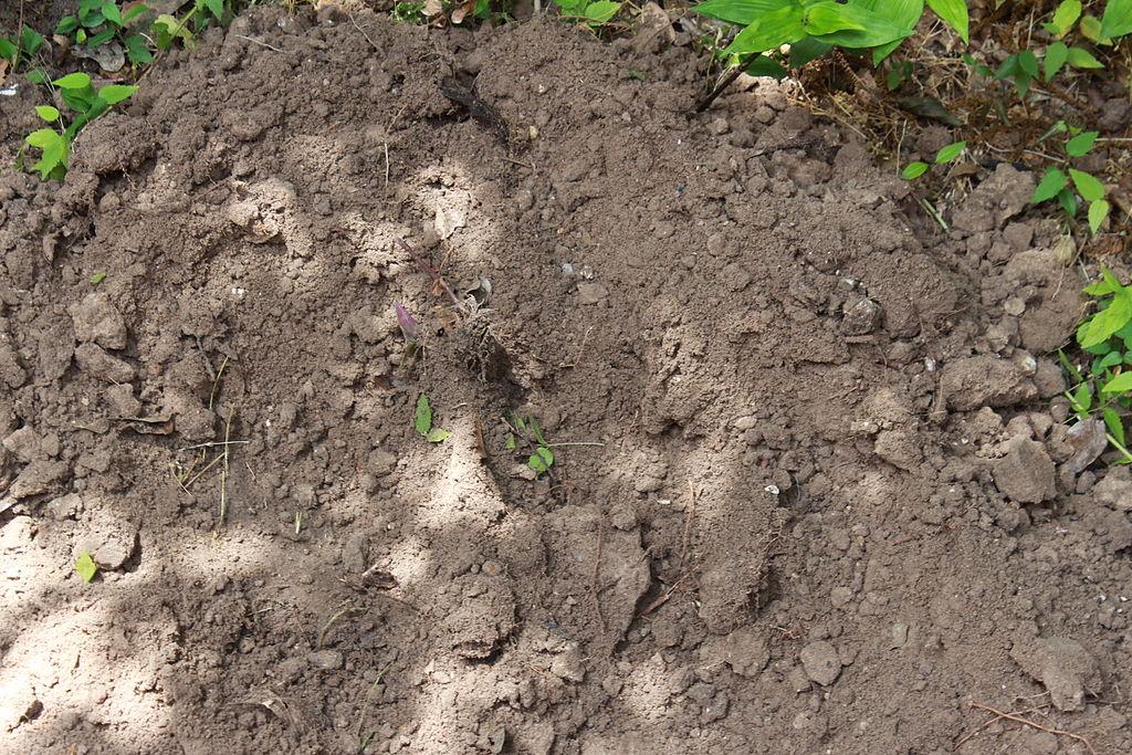 poo lawn soil
