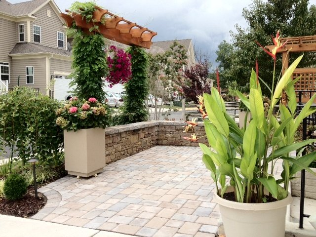 Trellis with vertical plants on patio