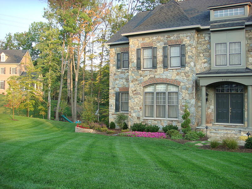 nice healthy lawn without thatch