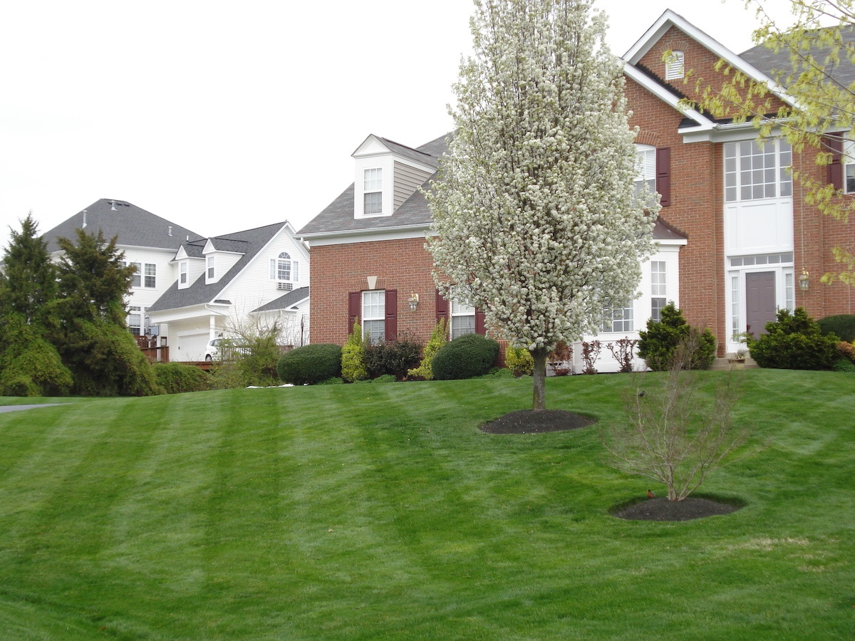 Healthy lawn with no weeds in Alexandria, VA