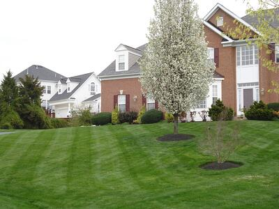 Healthy lawn with good soil