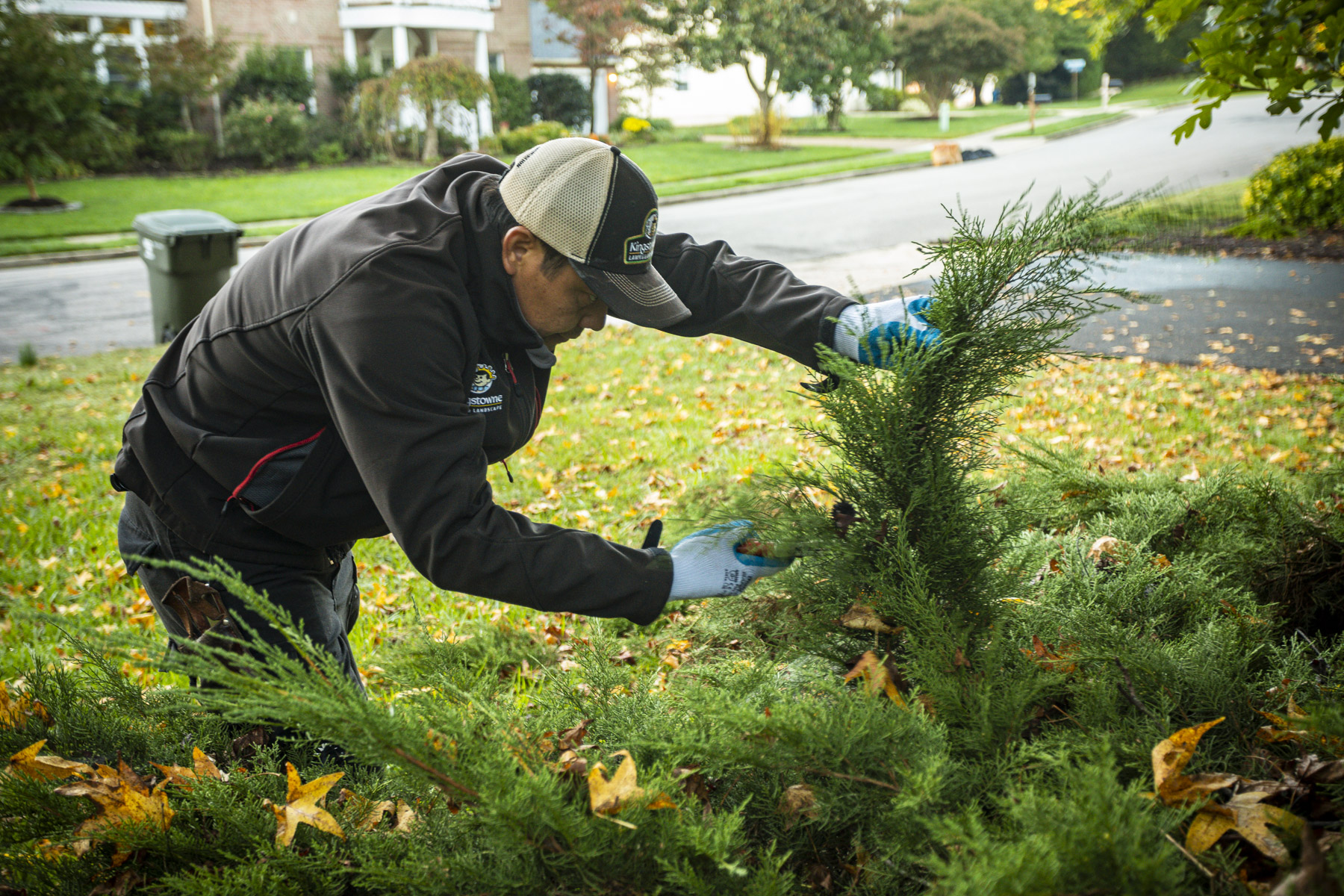 Lawn care team selective pruning