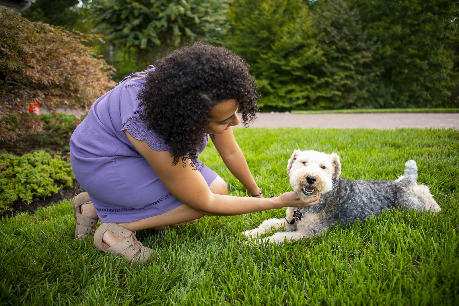 dog in lawn with flea and tick control