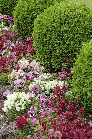 Flowers and green shrubs