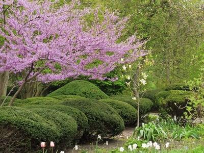Garden with trimmed shrubs