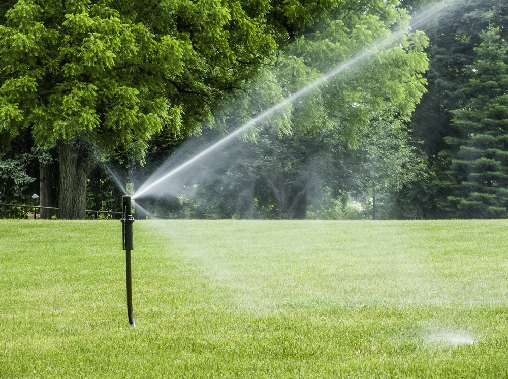 Lawn irrigation watering newly overseeded lawn