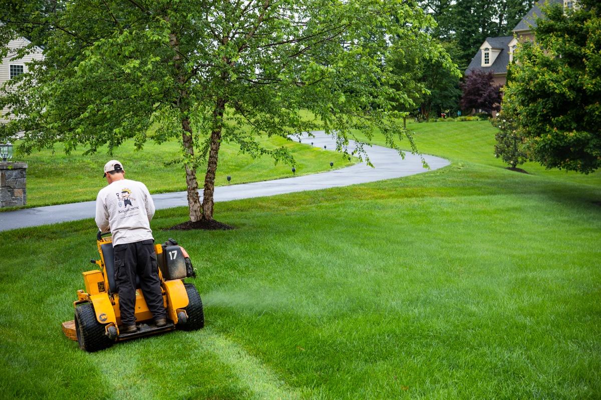 lawn mowing professional mowing nice lawn in Alexandria, Virginia