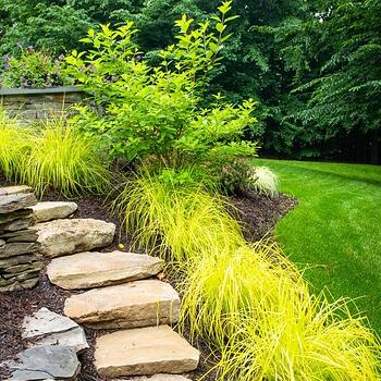 healthy plants maintained by Kingstowne Lawn & Landscape