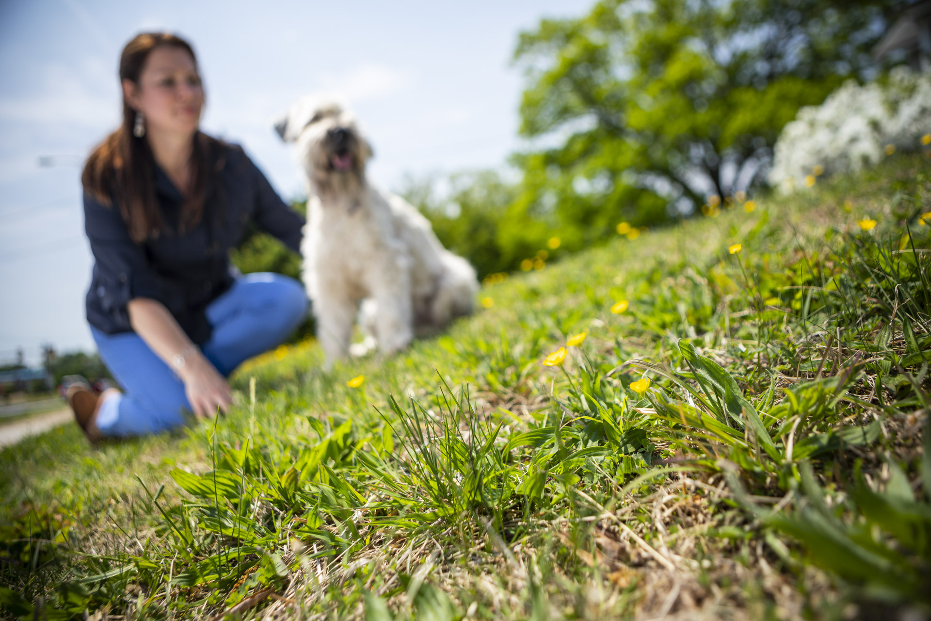 lawn-weeds-dog-customer-6