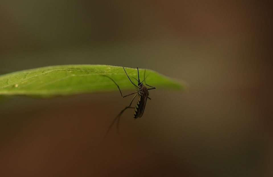 Understanding Mosquito Control and Companies in Alexandria and Arlington, VA