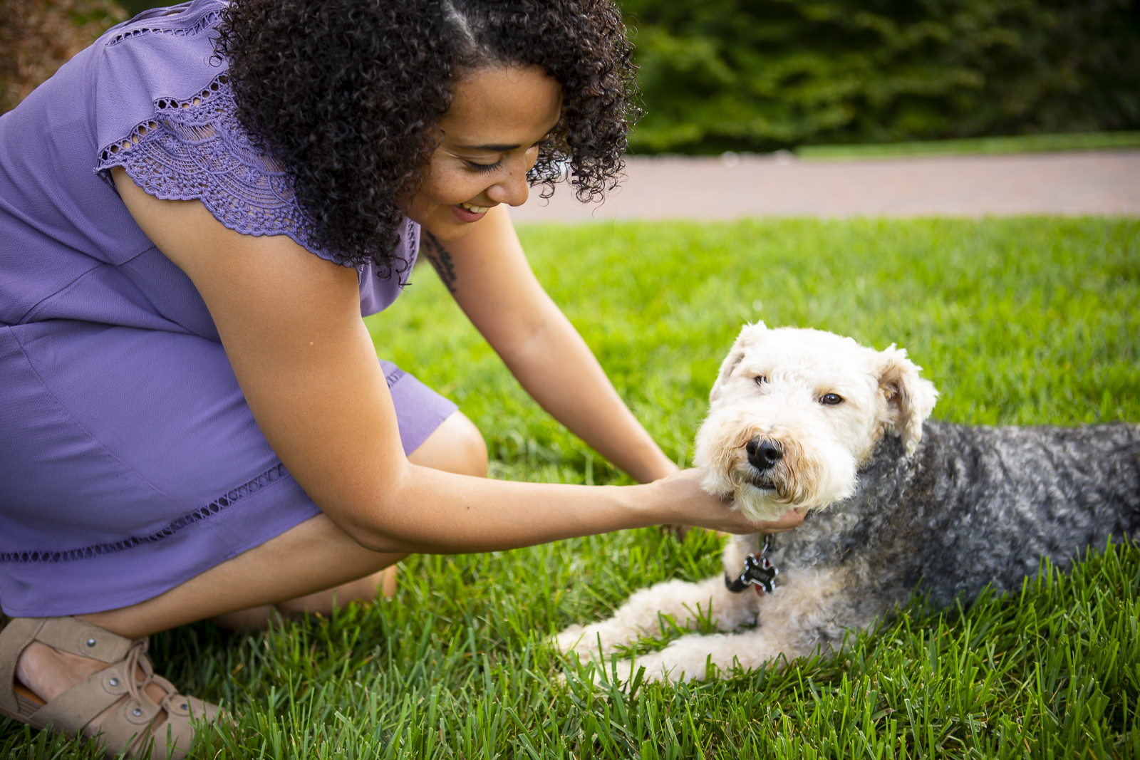 Dog in lawn with flea and tick treatment
