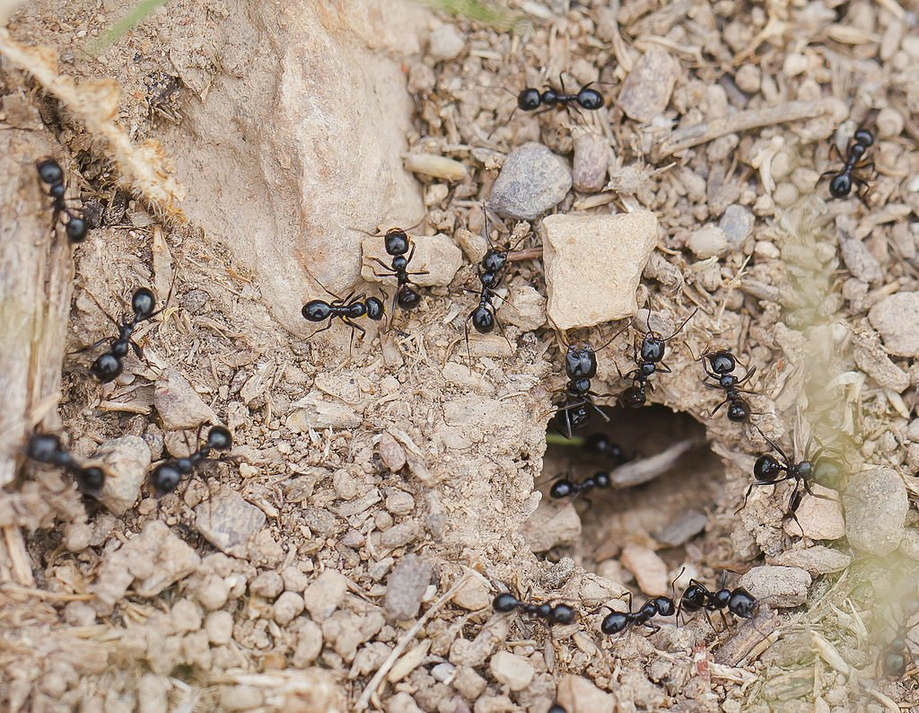 All About Ants in Virginia: Ant Identification & How to Control Them
