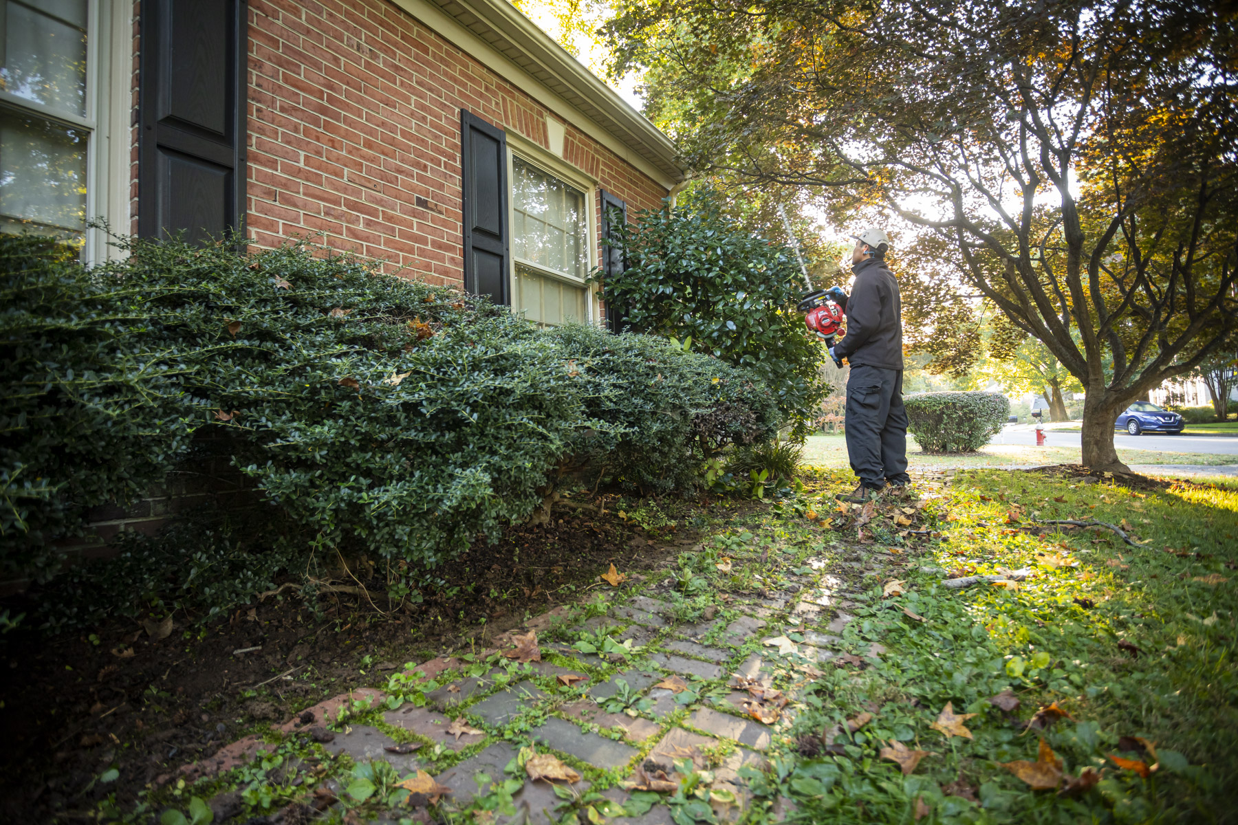 Pruning Shrubs: How to Prune, When to Prune, and The Cost of Pruning Services