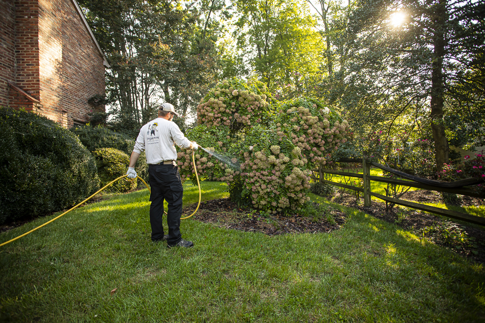 Plant health care technician spraying shrub