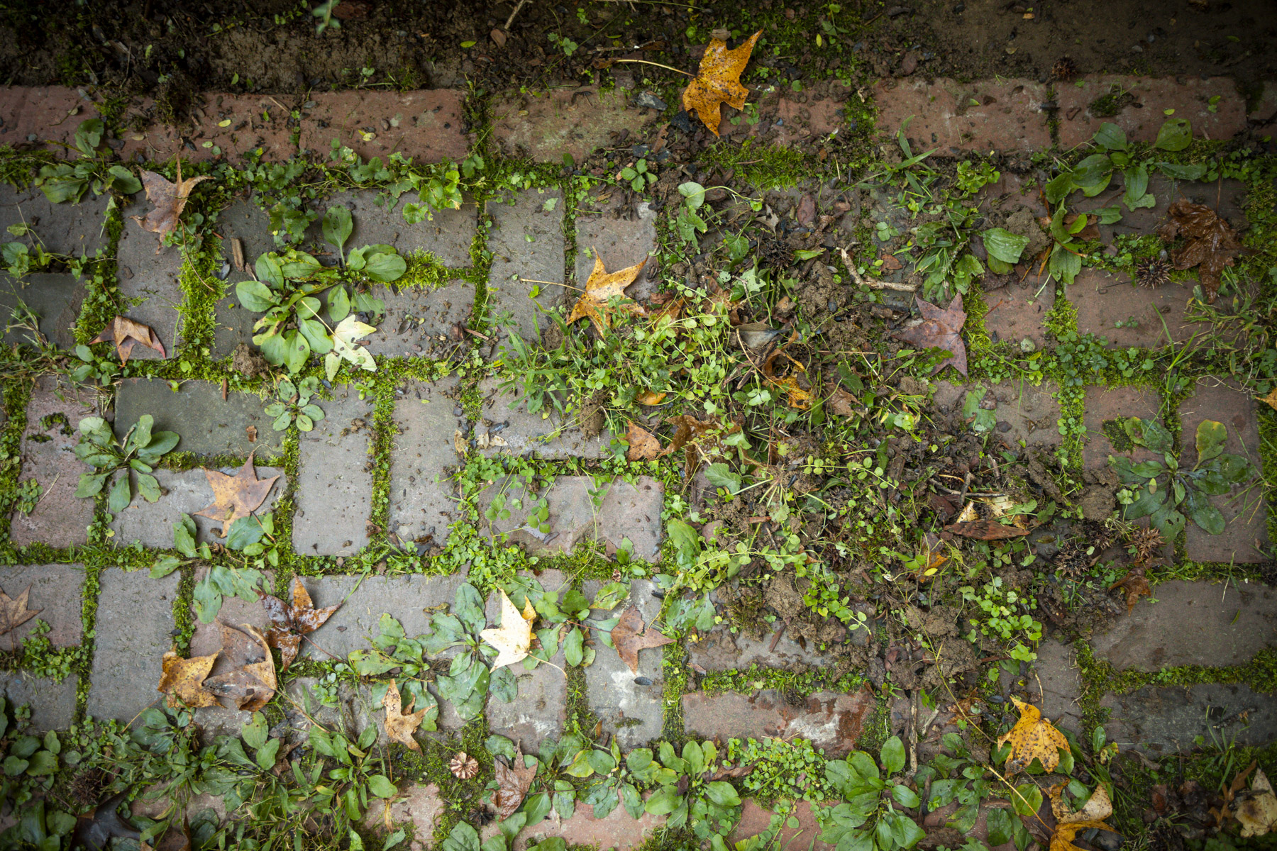 How to Prevent Weeds From Growing Between Pavers: It Starts With Installation