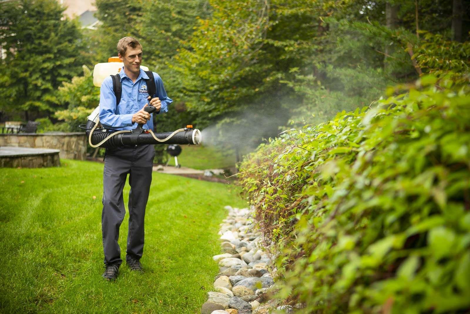 DIY Flea and Tick Spray for Yard vs. a Pest Control Service in Alexandria, VA