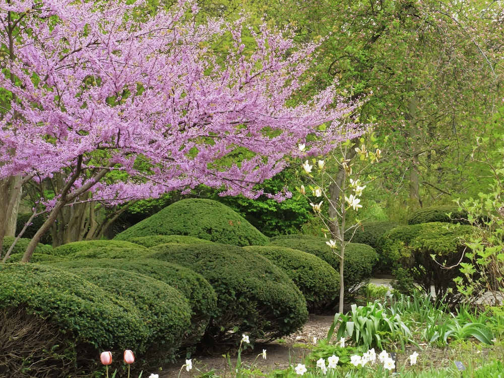 Essential Facts About Pruning Shrubs: Methods, How Often, and Cost