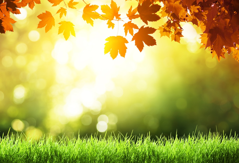Fall leaves and lawn