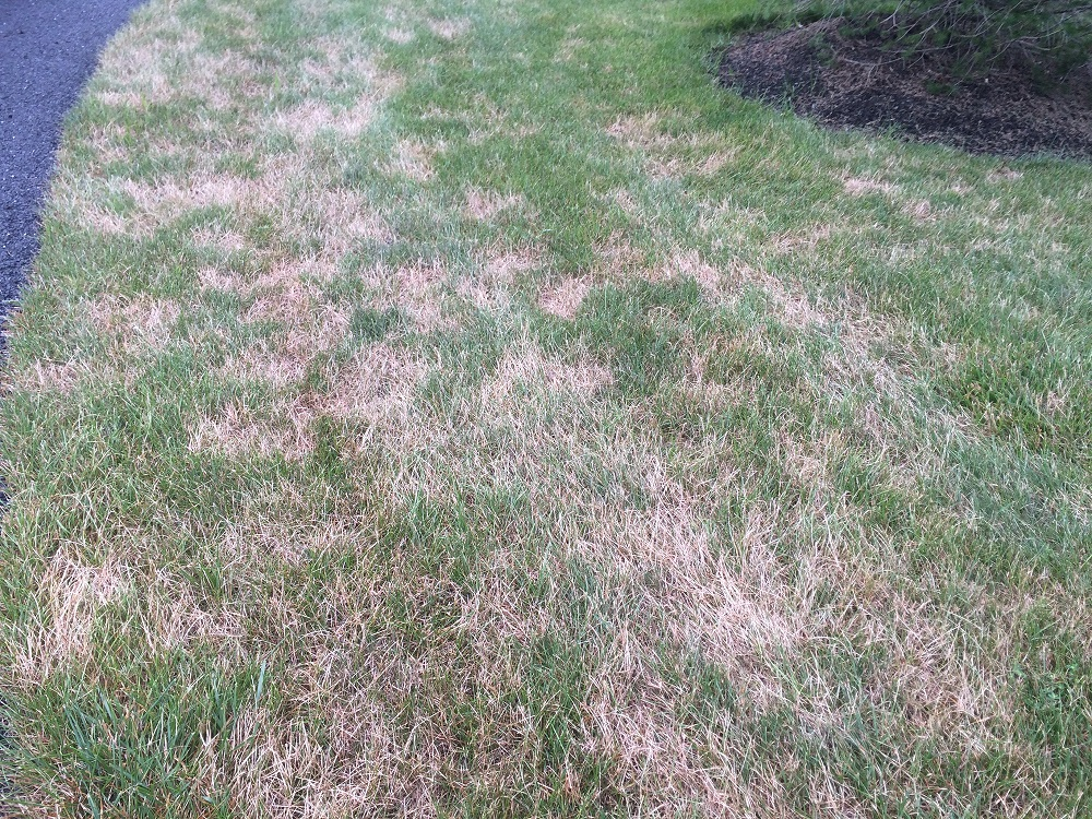 The 10 Worst Alexandria and Arlington, VA Lawn Problems: Weeds, Insects, Diseases, and More