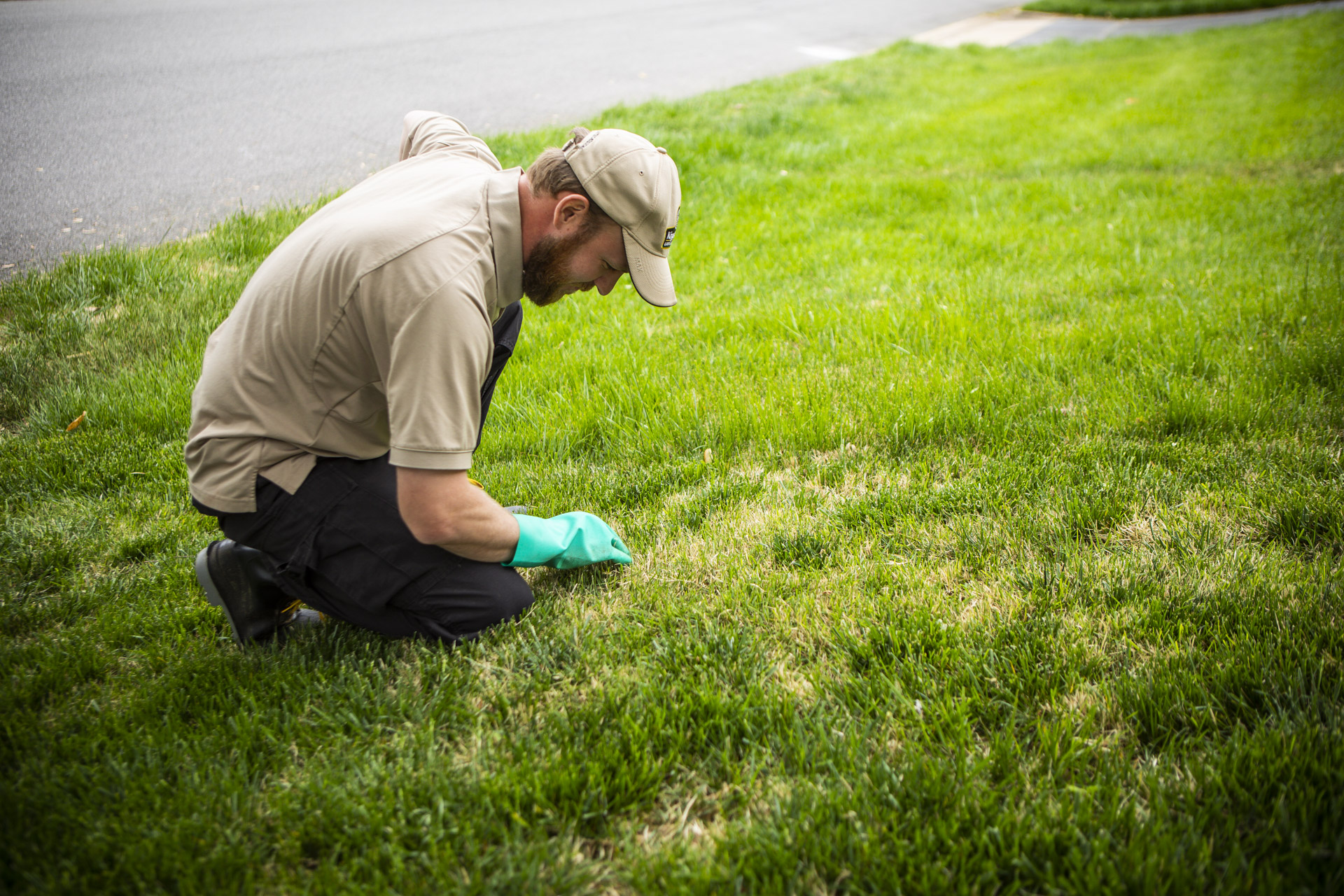 Lawn inspection