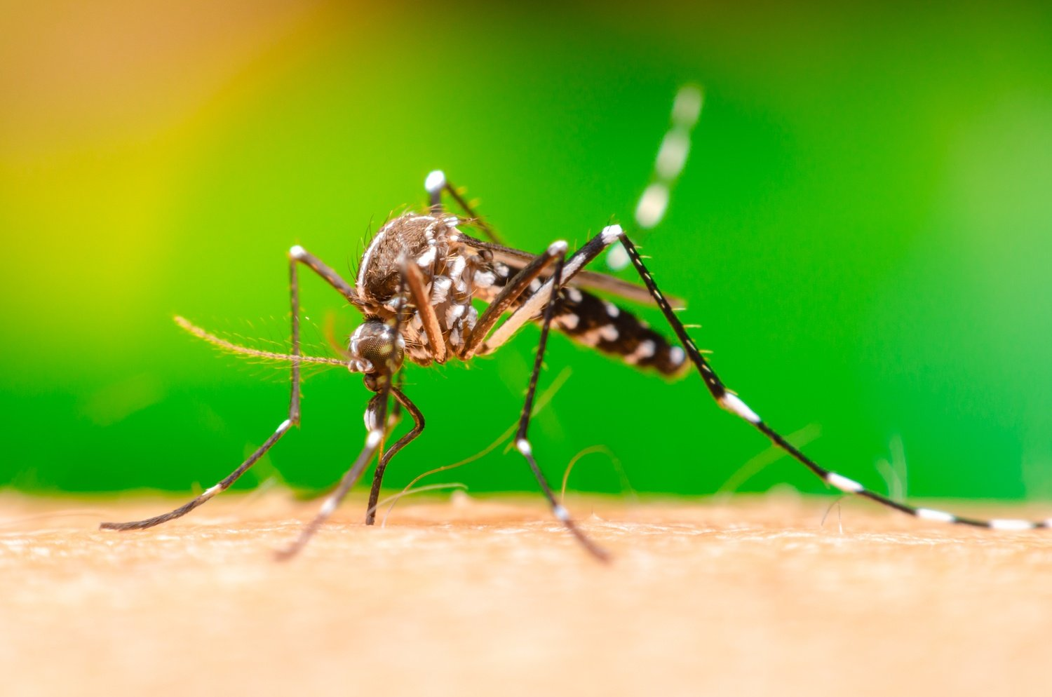 Mosquito Control Methods That Don't Work & What Actually Does