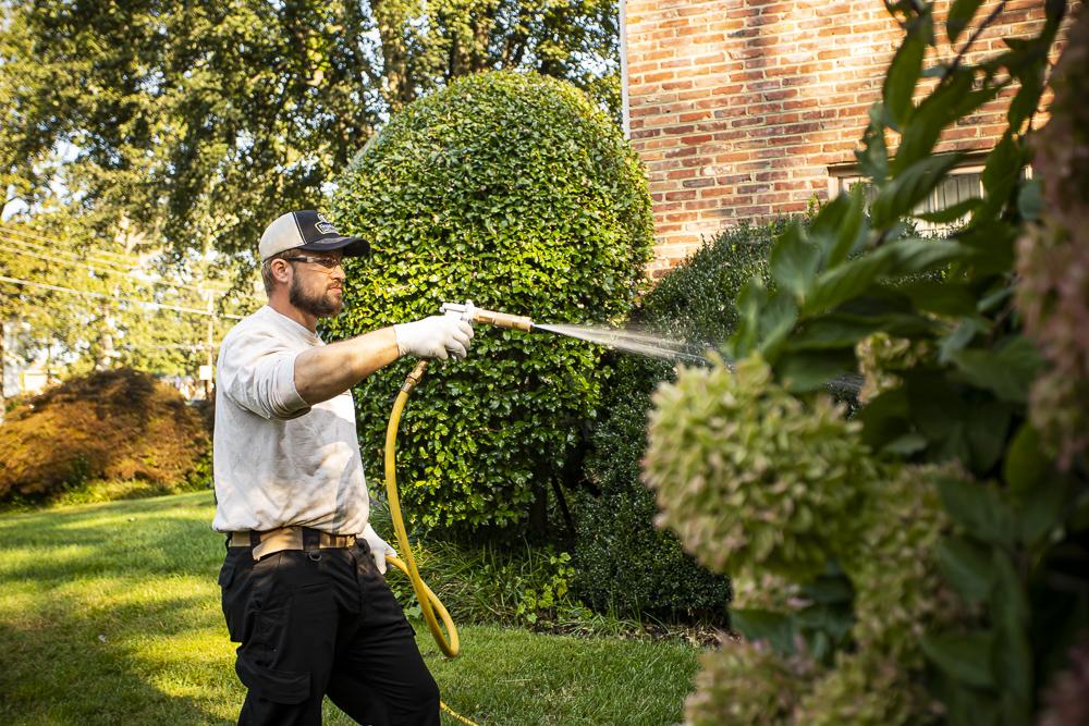 Pest control team spraying shrubs for pests