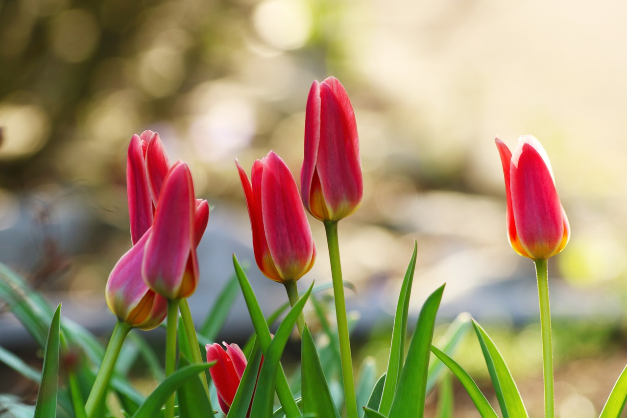 Keep Bulbs Blooming — Year After Year